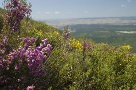 Flores en el Camino