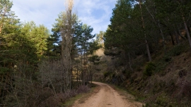 Bosque de Braojos