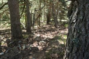 Sendero del pinar
