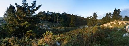Panoramica del bosque